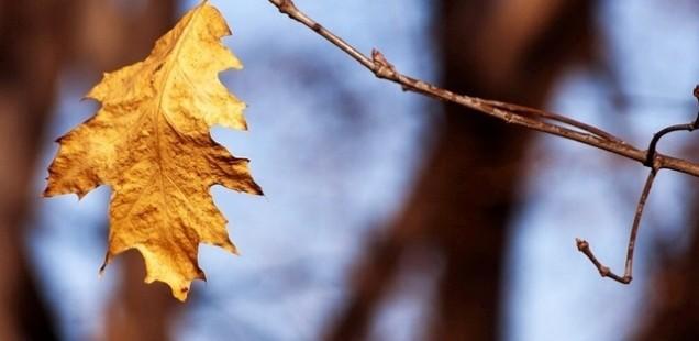 季節と肺の意外な関係とは?